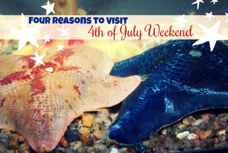 Fourth of July Weekend at Mystic Aquarium