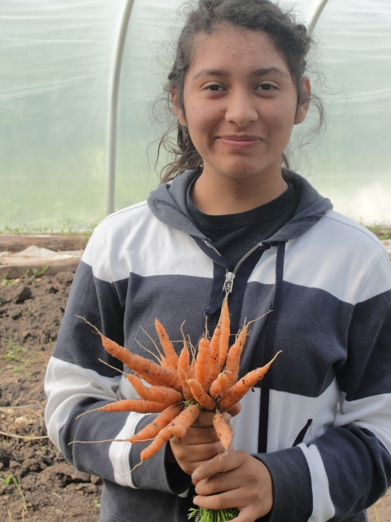 PFC carrots