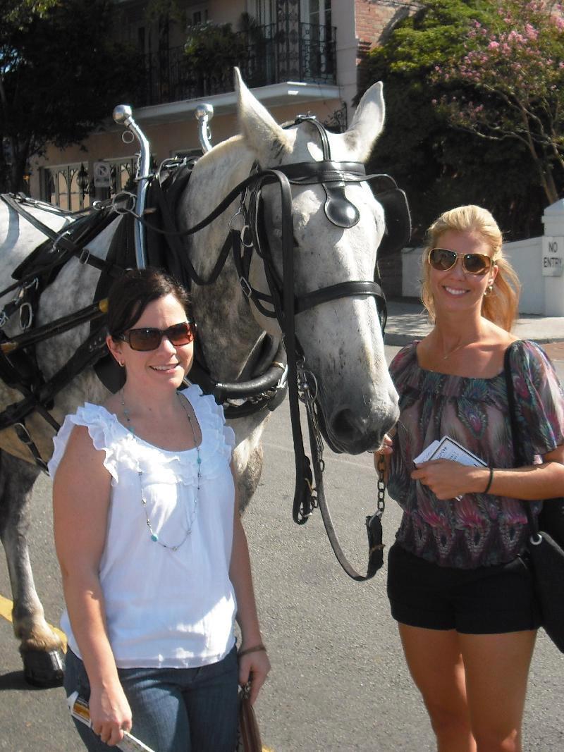 charleston horse