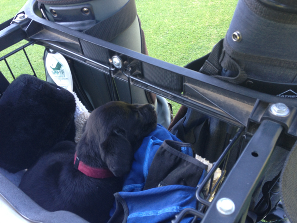 Arwen in golf cart