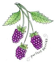 2145 - Perfect Berries