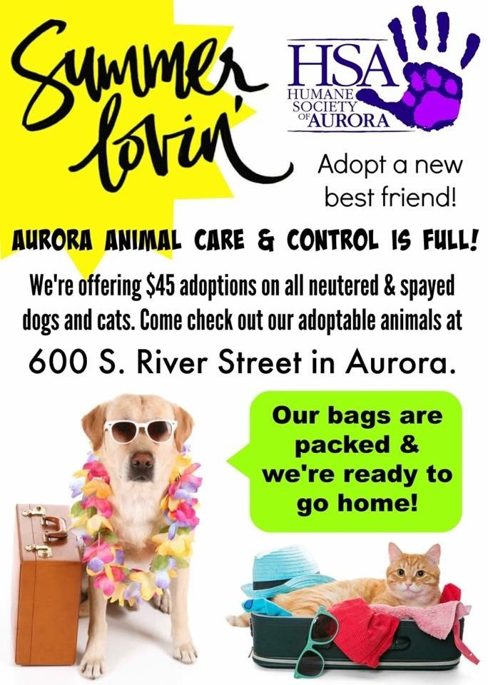 Aurora, IL - $45 Adoptions on all Neutered & Spayed Dogs and Cats