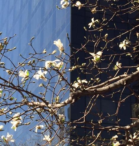 yin yang blossom