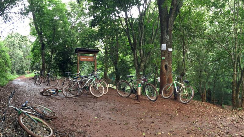 Bikes along path