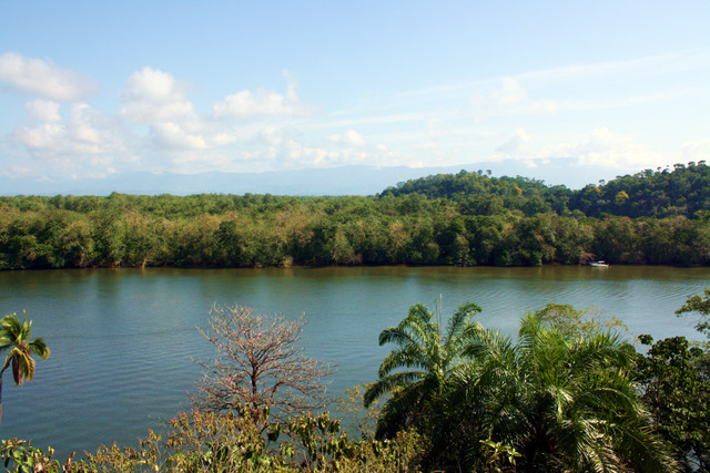 Great views of the rainforest occur in all directions from lot #1