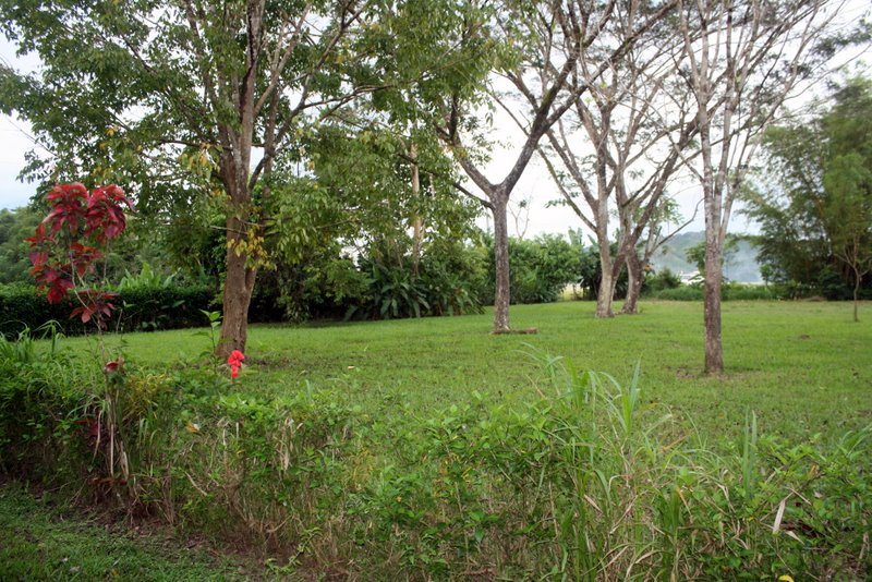 The Lots are Already Well Landscaped