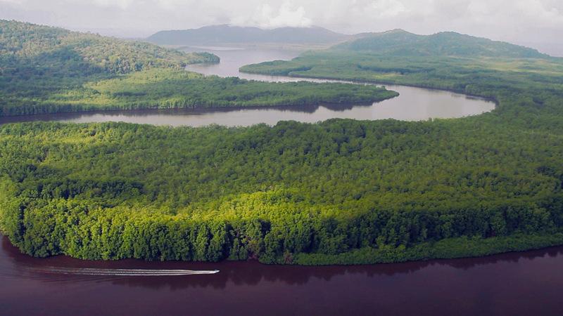 Sierpe River Mangrove Estuary