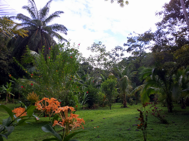 Lush Sierpe del Pacifico garden