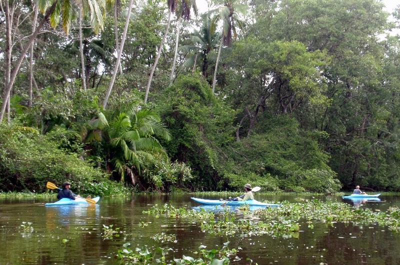 kayaking in the upper Sierpe river