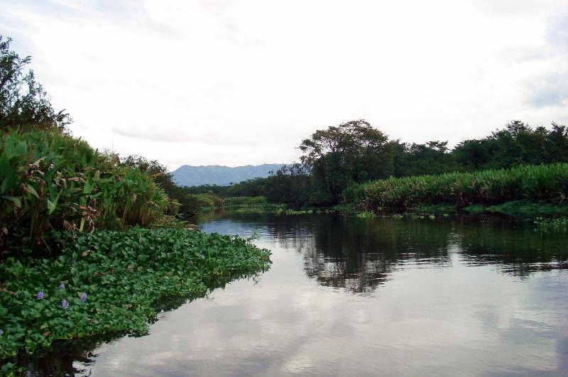 Upriver freshwater section of Sierpe River