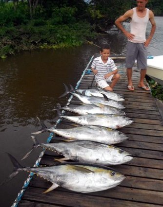 A slew of big tuna!