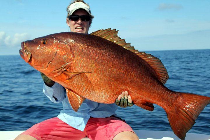 50 lb. cubera snapper caught near Sierpe