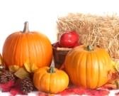Harvest fall