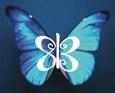 813 blue butterfly