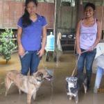 Volunteers walk the dogs.