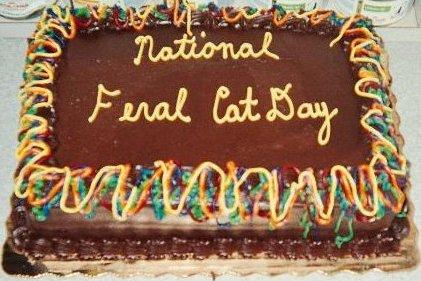 feral cat cake