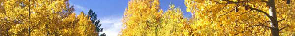 yellow-trees.jpg