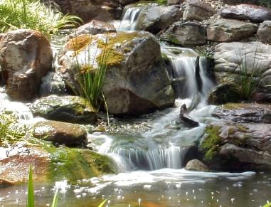Cape Fear Water Gardens