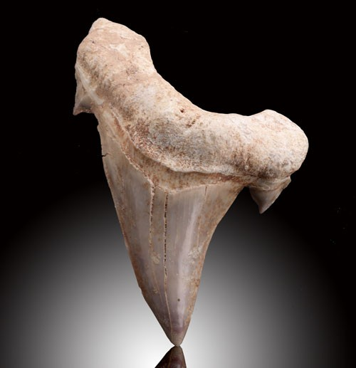 Shark's Tooth at Stone Garden