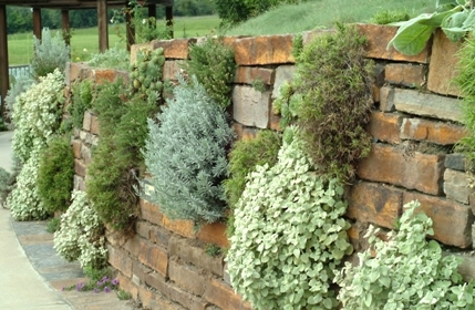 Herb Garden Drystack Wall