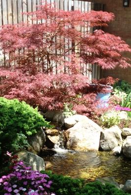 Cape Fear Water Gardens 2012