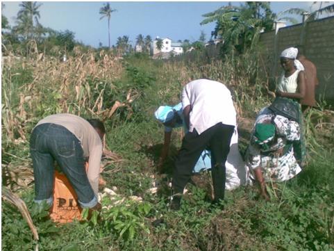 Corn Kenya