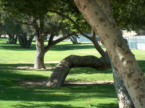 Crescenta Park