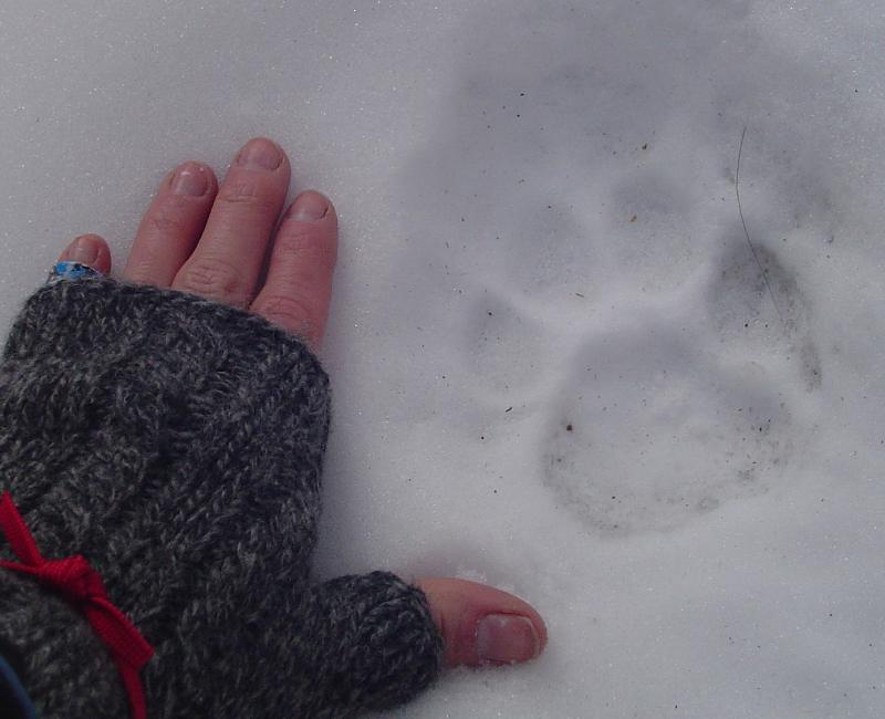 Get ouside and find animal tracks!