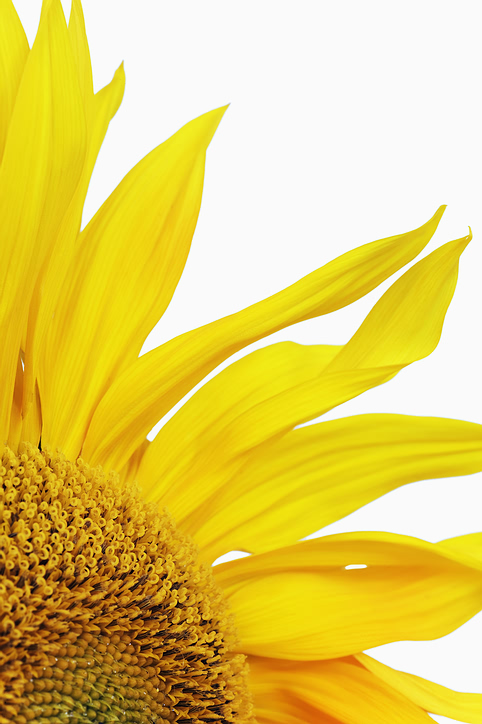 yellow_closeup_flower.jpg