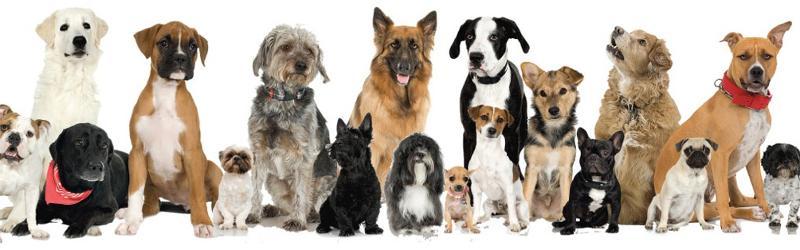 Dog Oiler Newsletter Header Image