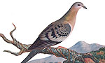 From Billions to None -- The Passenger Pigeon's Flight to Extinction