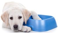 Dog Food Drive at Color Wheel
