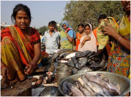 Co-op fish vendors, India