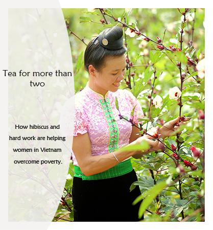 Ms tien grows hibiscus