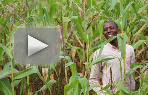 Click to see Rwanda video