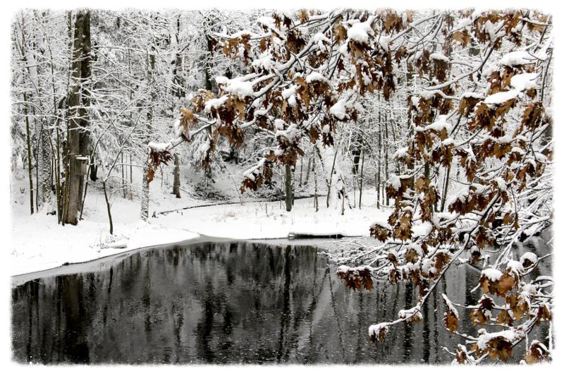 Woodland lake winter scene with snow covered trees and leaves.