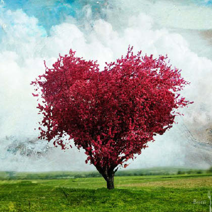 Plant a Tree for Valentine's Day
