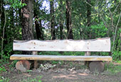 Bench on the walking trails