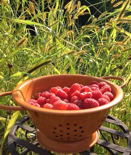Fall Raspberries