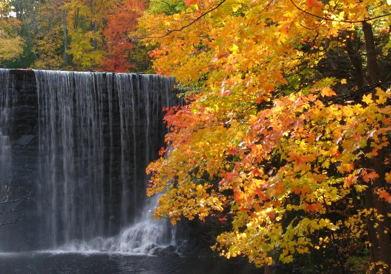 Fall Tree & waterfall