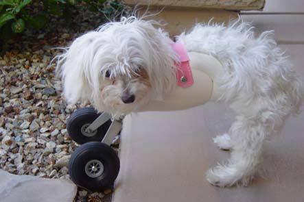 Hope's wheels