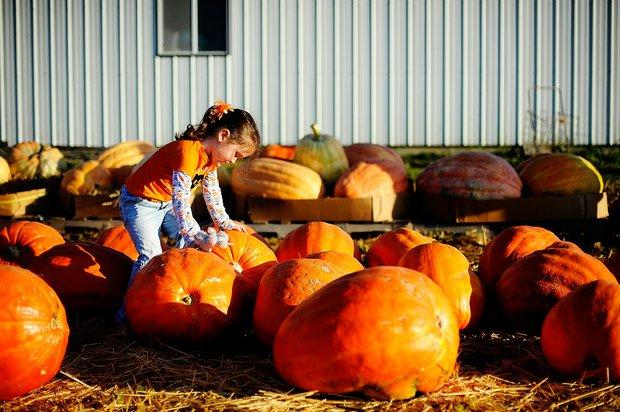 Hartsburg Pumpkin Festival