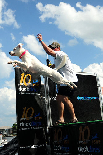 Canine Cannonball
