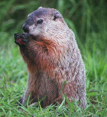 Economic Groundhog Day