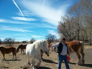 RV Draft Horse Ranch.2