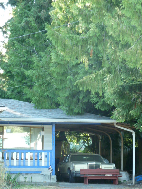 Tree overhanging roof