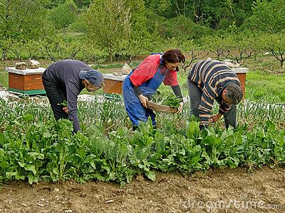 Farm Workers  Three