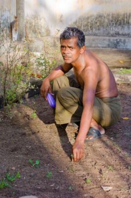 Farm Worker Weeding