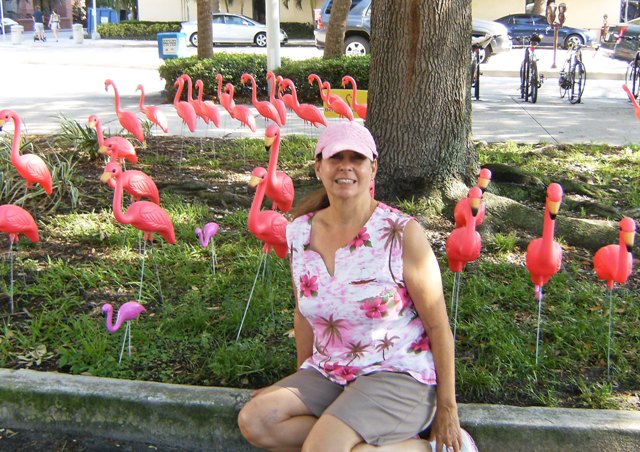 kalika with flamingo flock in st. pete