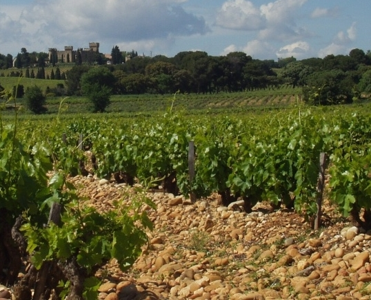 Galet covered CdP vineyards